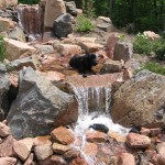Homeowner's lab cooling down in the waterfall
