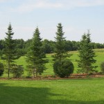 Complementary landscape element