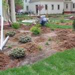 planting, landscape, decorative