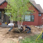 planting, trees, landscape
