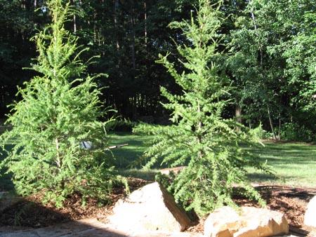 trees, plants, rocks, decorative, landscape